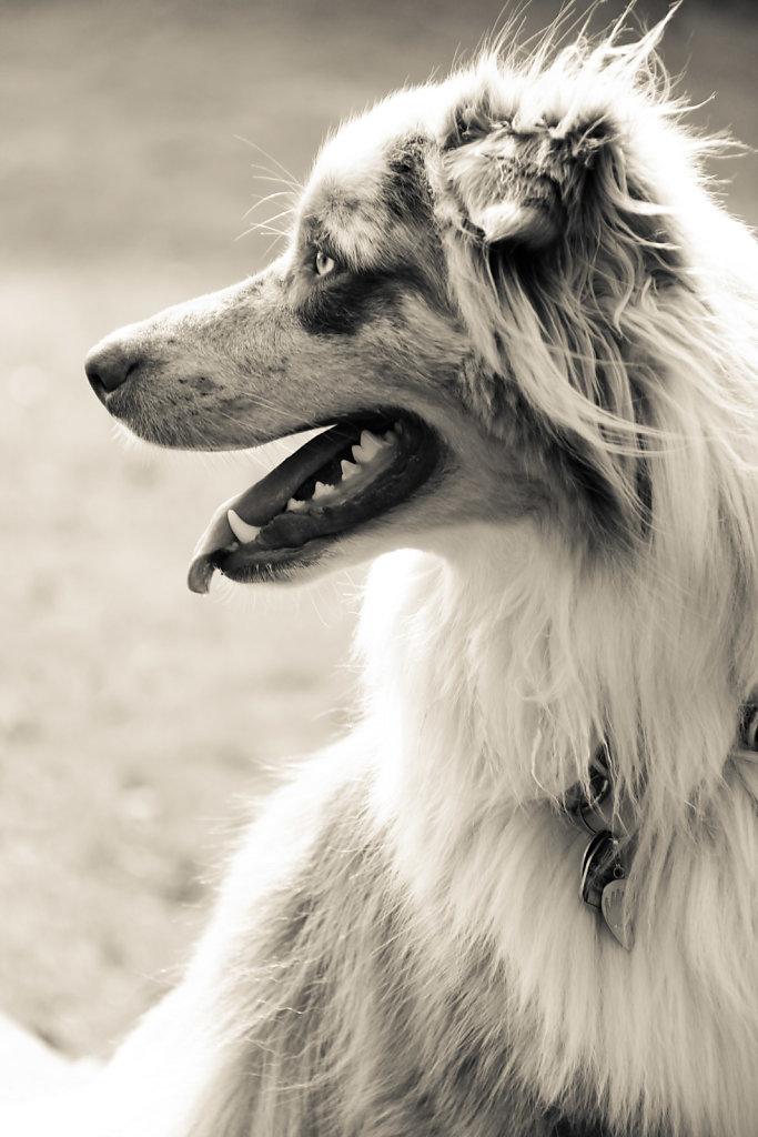 Hunde-5.jpg