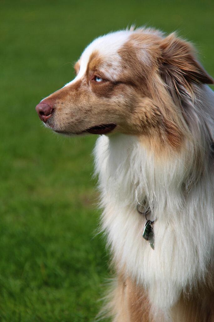 Hunde-20.jpg