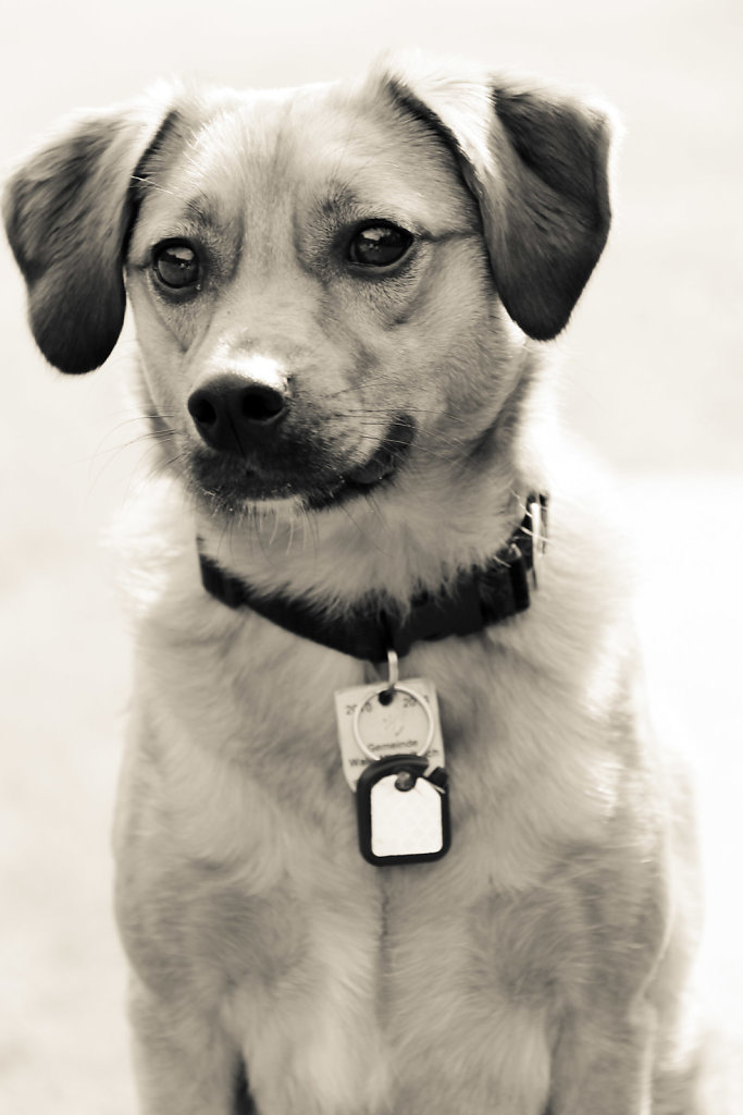 Hunde-26.jpg